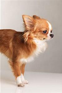 породы собак карликовые фото