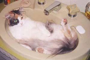 Кошка в раковине