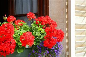 Домашние растения которые лечат и