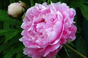 Цветы самые распространенные