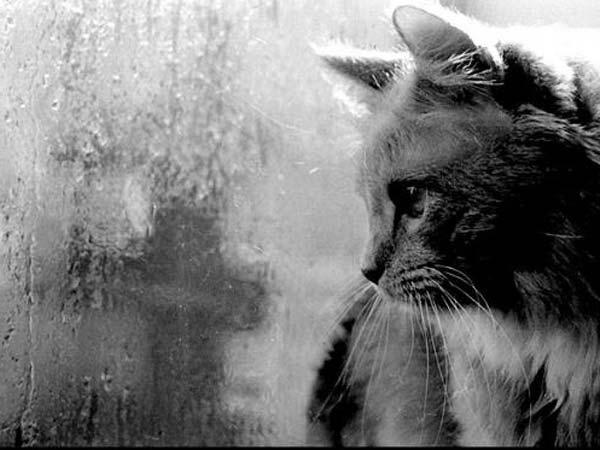 http://www.raut.ru/files/tato/gallery/rain/dogdi14.jpg